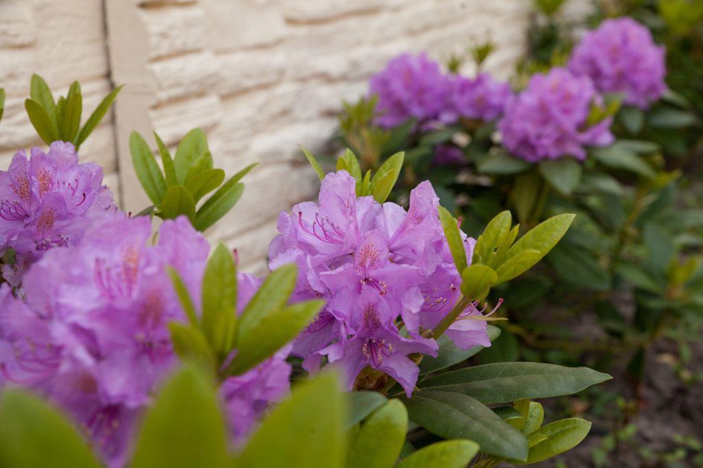 Tuin onderhouden - Hoveniersbedrijf Williams Garden