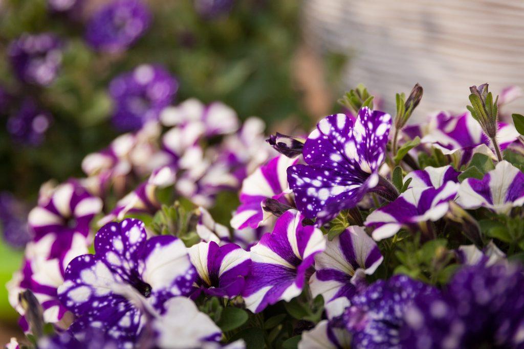 Tuin opknappen - Hoveniersbedrijf Williams Garden